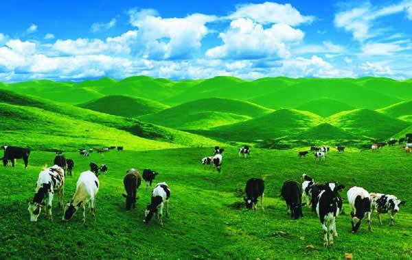 南山 南山风景区 南山旅游景点 南山牧场